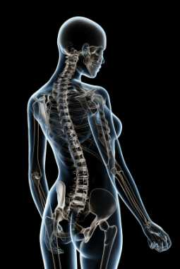Spinal Touch Therapy, a view of the skeleton